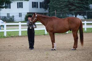 Horse Show 2015